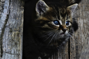 https://pixabay.com/en/cat-kitten-rozko%C5%A1n%C3%A9-little-wood-914110/