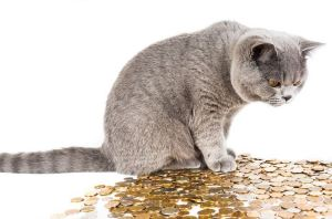 Cat and money